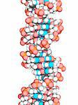 DNA molecule. Molecular model of DNA (deoxyribonucleic acid).