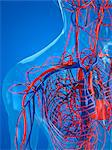 Cardiovascular system, computer artwork. Stock Photo - Premium Royalty-Free, Artist: ableimages, Code: 679-05994341