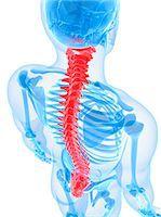 spinal column - Spine, computer artwork. Stock Photo - Premium Royalty-Freenull, Code: 679-05995419