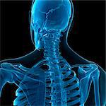 Upper body bones, computer artwork. Stock Photo - Premium Royalty-Free, Artist: Robert Harding Images, Code: 679-05995441