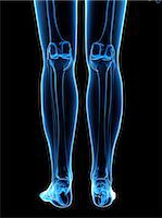 Leg bones, computer artwork. Stock Photo - Premium Royalty-Freenull, Code: 679-05995460