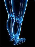 Leg bones, computer artwork. Stock Photo - Premium Royalty-Freenull, Code: 679-05995461