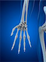 Hand bones, computer artwork. Stock Photo - Premium Royalty-Freenull, Code: 679-05995465
