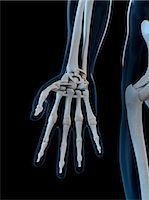 Hand bones, computer artwork. Stock Photo - Premium Royalty-Freenull, Code: 679-05995466