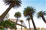 Australia, New South Wales, Sydney, Sydney Harbour Bridge, Low view with palm trees in forefround Stock Photo - Premium Rights-Managed, Artist: AWL Images, Code: 862-05996745