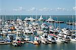 Australia, Queensland, Cairns.  Boats moored in the Marlin Marina. Stock Photo - Premium Rights-Managed, Artist: AWL Images, Code: 862-05996778
