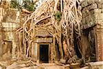 Cambodia, Siem Reap, Angkor. Overgrown tree roots at Ta Prohm, part of the Angkor  Complex. Stock Photo - Premium Rights-Managed, Artist: AWL Images, Code: 862-05997273