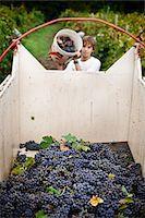 Italy, Umbria, Terni district, Castelviscardo. Grape harvest. Stock Photo - Premium Rights-Managednull, Code: 862-05998214