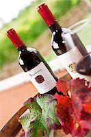 Italy, Umbria, Terni district, Giove. Ciliegiolo di Narni at the Sandonna winery. Stock Photo - Premium Rights-Managednull, Code: 862-05998222