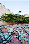 North America, Mexico, Oaxaca state, Oaxaca, garden in Santo Domingo church Stock Photo - Premium Rights-Managed, Artist: AWL Images, Code: 862-05998591