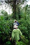 Trekking in Volcanoes National Park, Rwanda, in search of mountain gorillas. Stock Photo - Premium Rights-Managed, Artist: AWL Images, Code: 862-05999047