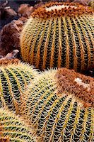 spike - Detail of a Cactus in Lanzarote, Spain Stock Photo - Premium Rights-Managednull, Code: 862-05999401