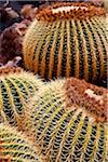 Detail of a Cactus in Lanzarote, Spain Stock Photo - Premium Rights-Managed, Artist: AWL Images, Code: 862-05999401