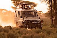 serengeti national park - Safari vehicle on a game drive at dusk in the Ndutu region of the Serengeti National Park, Tanzania. Stock Photo - Premium Rights-Managednull, Code: 862-05999564