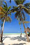 Tanzania, Zanzibar, Unguja, Pongwe. The view out so sea from the Pongwe Beach Hotel. Stock Photo - Premium Rights-Managed, Artist: AWL Images, Code: 862-05999587