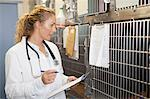 Veterinarian reading animals chart Stock Photo - Premium Royalty-Free, Artist: ableimages, Code: 649-06000991
