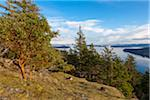 Arbutus Tree on Reginald Hill, Salt Spring Island, British Columbia, Canada Stock Photo - Premium Rights-Managed, Artist: J. A. Kraulis, Code: 700-06009109