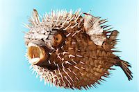 spike - Taxidermal inflated puffer fish, studio shot Stock Photo - Premium Royalty-Freenull, Code: 693-06018915