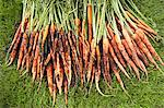 Freshly picked carrots on lawn Stock Photo - Premium Royalty-Free, Artist: Cultura RM, Code: 693-06019362