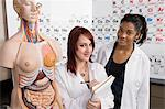 Anatomy Students Stock Photo - Premium Royalty-Free, Artist: Blend Images, Code: 693-06021077