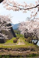 Cherry blossom at ancient castle of Sasayama, Hyogo Prefecture, Japan Stock Photo - Premium Rights-Managednull, Code: 855-06022714