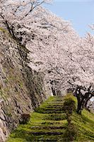 Cherry blossom at ancient castle of Sasayama, Hyogo Prefecture, Japan Stock Photo - Premium Rights-Managednull, Code: 855-06022717