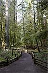 Walkway through Cathedral Grove, MacMillan Provincial Park, Vancouver Island, British Columbia, Canada Stock Photo - Premium Rights-Managed, Artist: Ron Fehling, Code: 700-06025277