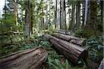 Walkway through Cathedral Grove, MacMillan Provincial Park, Vancouver Island, British Columbia, Canada