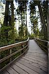 Walkway through Cathedral Grove, MacMillan Provincial Park, Vancouver Island, British Columbia, Canada Stock Photo - Premium Rights-Managed, Artist: Ron Fehling, Code: 700-06025282
