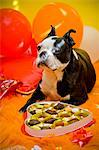 Dog with valentine box of candy Stock Photo - Premium Royalty-Free, Artist: Masterfile, Code: 673-06025329