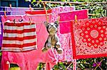 Laundry and stuffed dog hanging on outdoor lines Stock Photo - Premium Royalty-Free, Artist: CulturaRM, Code: 673-06025439