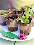 Seedlings in paper pots Stock Photo - Premium Royalty-Free, Artist: Frank Krahmer, Code: 6102-06025888