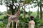 Girl watching giraffes at zoo Stock Photo - Premium Royalty-Free, Artist: Gail Mooney              , Code: 632-06029291
