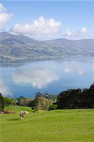 Otago Harbour, Otago Peninsula, Otago, South Island, New Zealand, Pacific Stock Photo - Premium Rights-Managednull, Code: 841-06030991