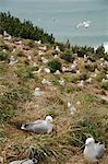 Royal Albatross Centre, Dunedin, Otago Peninsula, South Island, New Zealand, Pacific Stock Photo - Premium Rights-Managed, Artist: Robert Harding Images, Code: 841-06030999