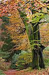 Deciduous woodland with beautiful autumn colours, Grasmere, Lake District, Cumbria, England, United Kingdom, Europe Stock Photo - Premium Rights-Managed, Artist: Robert Harding Images, Code: 841-06031565