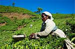 Tamil worker on a tea plantation, Munnar, Kerala, India, Asia Stock Photo - Premium Rights-Managed, Artist: Robert Harding Images, Code: 841-06032996
