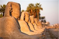 Luxor Temple, Luxor, Thebes, UNESCO World Heritage Site, Egypt, North Africa, Africa Stock Photo - Premium Rights-Managednull, Code: 841-06033876