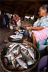 Woman selling fish, Mapusa Market, Goa, India, Asia Stock Photo - Premium Rights-Managed, Artist: Robert Harding Images, Code: 841-06033991