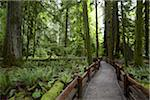Path Through Forest, MacMillan Provincial Park, Vancouver Island, British Columbia, Canada