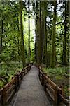 Path Through Forest, MacMillan Provincial Park, Vancouver Island, British Columbia, Canada Stock Photo - Premium Rights-Managed, Artist: Ron Fehling, Code: 700-06038129