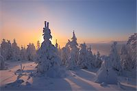 snow covered trees - Snow Covered Trees at Sunset, Fichtelberg, Ore Mountains, Saxony, Germany Stock Photo - Premium Royalty-Freenull, Code: 600-06038298