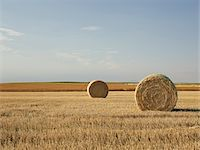 Hay Bales in Partially Harvested Prairie Wheat Field, Pincher Creek, Alberta, Canada Stock Photo - Premium Rights-Managednull, Code: 700-06038201