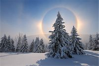 snow covered trees - Halo and Snow Covered Trees, Fichtelberg, Ore Mountains, Saxony, Germany Stock Photo - Premium Royalty-Freenull, Code: 600-06038306