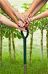 Hands pushing shovel into dirt Stock Photo - Premium Royalty-Free, Artist: Blend Images, Code: 649-06040054
