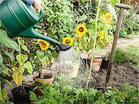 Hand watering plants in backyard Stock Photo - Premium Royalty-Freenull, Code: 649-06040079