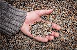 Hand holding palmful of seeds Stock Photo - Premium Royalty-Free, Artist: Cultura RM, Code: 649-06040093