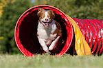 Dog running through tunnel Stock Photo - Premium Royalty-Free, Artist: Blend Images, Code: 614-06043488