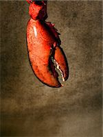 Lobster claw Stock Photo - Premium Royalty-Freenull, Code: 614-06044761