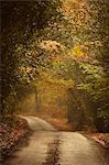 Autumn trees lining rural lane in woods Stock Photo - Premium Royalty-Free, Artist: GreatStock, Code: 635-06045604